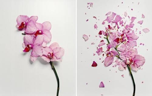 broken-flowers-1