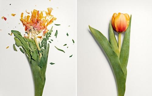 broken-flowers-2