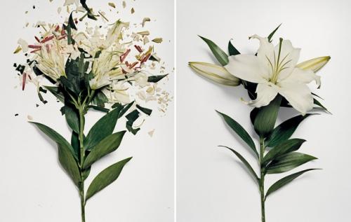 broken-flowers-3