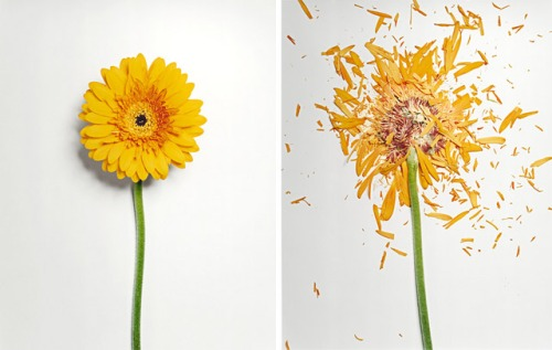 broken-flowers-4