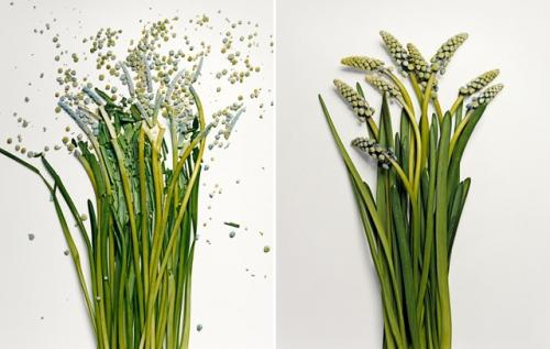 broken-flowers-5