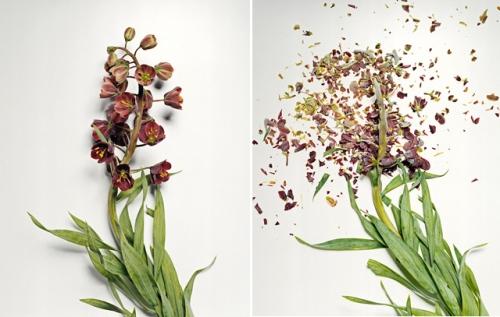 broken-flowers-6