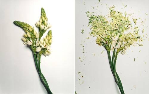 broken-flowers-7