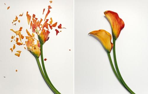 broken-flowers-8