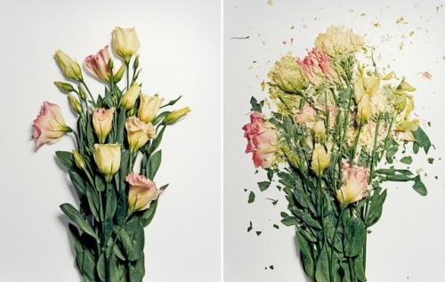 broken-flowers-9